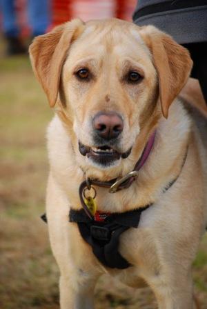Dog Agility Training Geelong