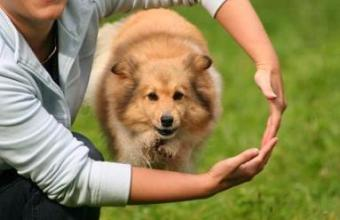 A dog jumping through its owner's arms