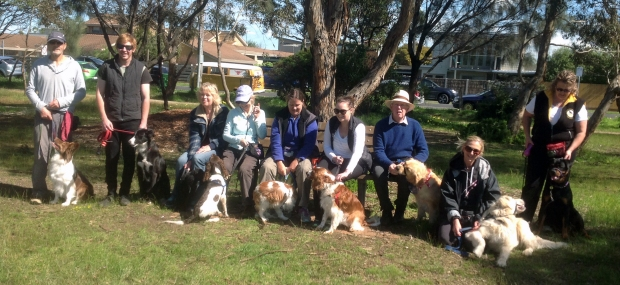BDAG Geelong Canine Citizen graduates, September 2016